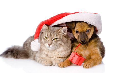 cat and dog with santa hat and red box  isolated on white background photo