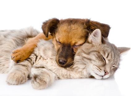 猫と犬は白で隔離される一緒に寝ています。