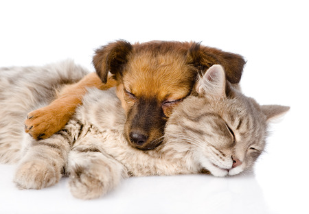 cat sleeping: cat and dog sleeping together  isolated on white