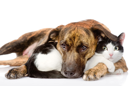 Cat Dog Breed Mix Mixed Breed Dog And Cat Lying