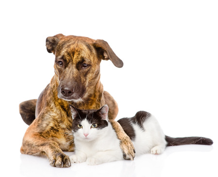 puppy and kitten: Large dog and cat lying together  isolated on white