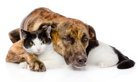 mixed breed dog and cat lying together  isolated on white background Reklamní fotografie