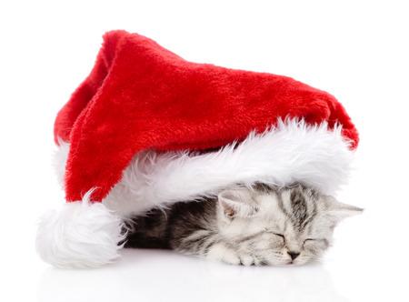 sleeping scottish kitten with santa hat  isolated on white