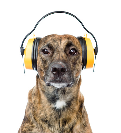 dog with headphones for ear protection from noise  isolated on white