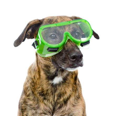 Hund mit Schutzbrille, isoliert auf weiss