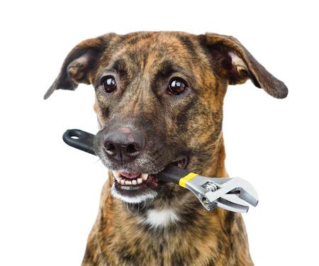 화이트 절연 조절 렌치와 강아지