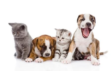 dogs sitting: Grupo de perros y gatos que se sientan delante aislados en blanco Foto de archivo