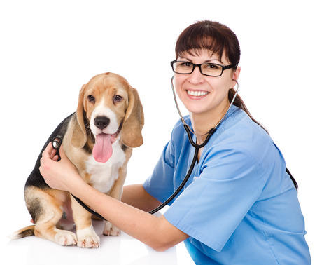 vet checking the heart rate of a puppy  isolated on white background Stock Photo - 24666394