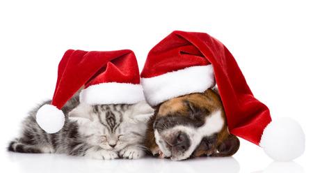 sleeping scottish kitten and puppy with santa hat  Stock Photo
