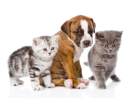 cats and dog in front  isolated on white background photo