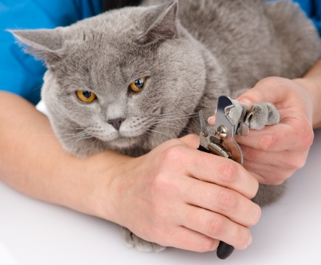 trims: vet cutting cat toenails  isolated on white background Stock Photo