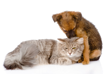 dog kisses cat  isolated on white  photo