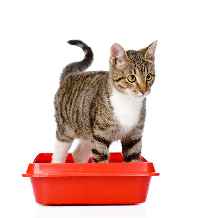 Kätzchen in rote Plastik Wurf Katze isoliert auf weiß