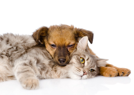 cat and dog sleeping  isolated on white background photo
