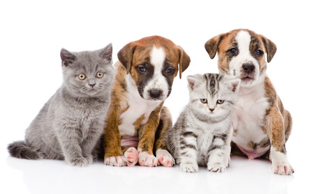 Group of cats and dogs sitting in front  isolated on white