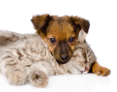 Dog and cat sleeping  isolated on white