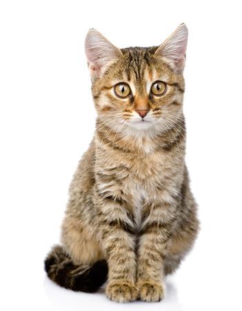 小さな子猫座って前に白の背景に分離