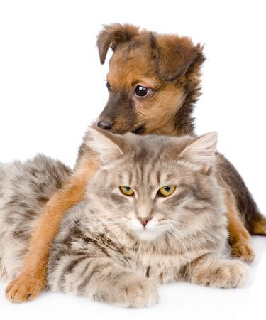small white dog: mixed breed dog hugging cat  isolated on white background