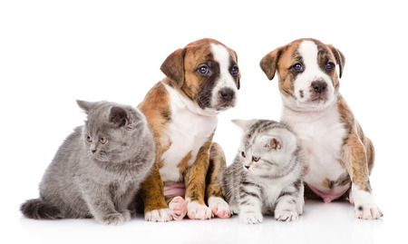 Group of cats and dogs sitting in front  isolated on white background photo