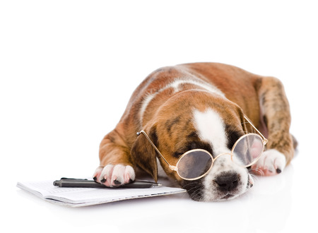 whelp: sleeping puppy with pen and notebook  isolated on white background Stock Photo