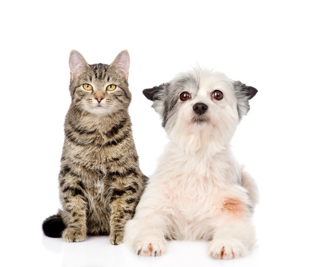 cat and dog looking at camera together  isolated on white background photo