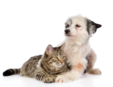 dog hugging cat  isolated on white background photo
