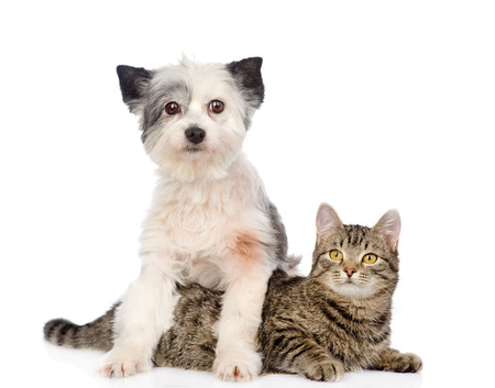 dog and cat together  isolated on white background photo