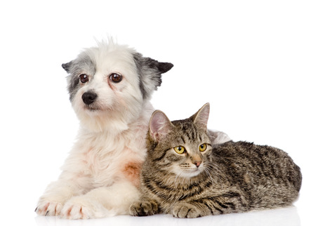 cat and dog lie nearby  isolated on white background photo