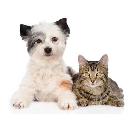 cat with dog looking at camera together  isolated on white background photo