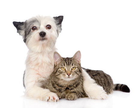 dog embracing cat  isolated on white background photo