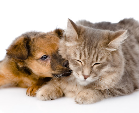 dog kisses cat  isolated on white background photo