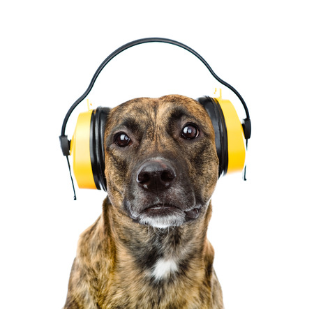 dog with headphones for ear protection from noise  isolated on white background photo