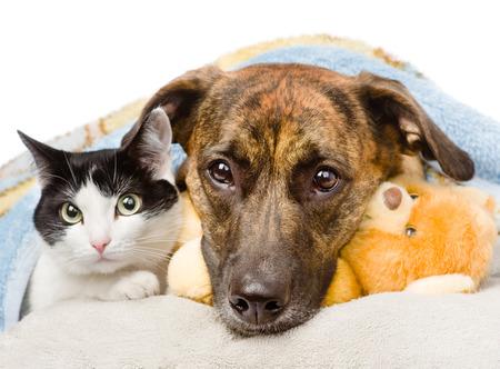 cão triste e gato deitado em um travesseiro debaixo de um cobertor isolado no fundo branco Imagens