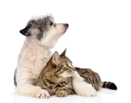dog embracing cat and looking away  isolated on white background photo