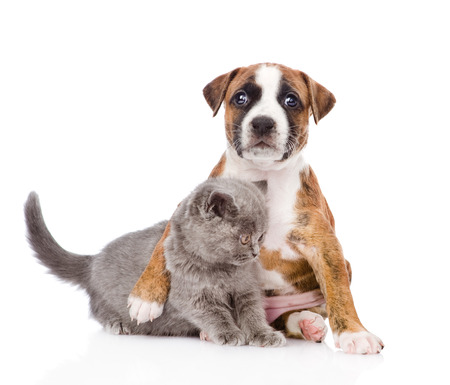 puppy hugs kitten  isolated on white background photo