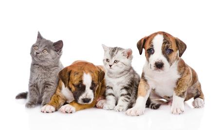 dogs sitting: Grupo de perros y gatos que se sientan delante aislados sobre fondo blanco Foto de archivo