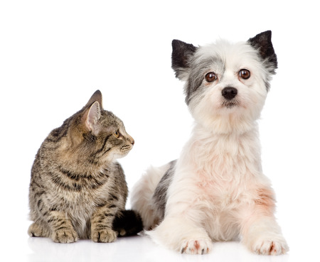 cat with dog together  isolated on white  photo