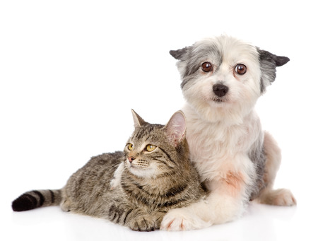 dog embracing cat  isolated on white  photo