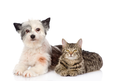 cat and dog lie nearby  isolated on white  photo