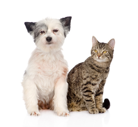 cat and dog sitting together  isolated on white  photo