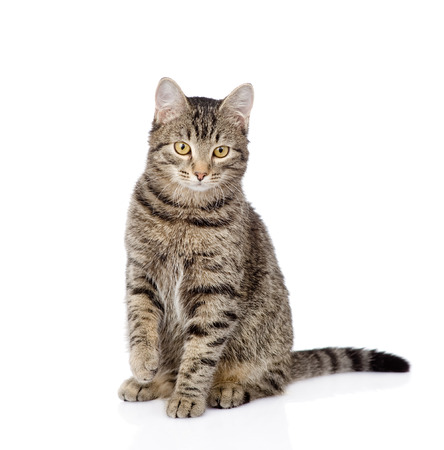 cat sitting in front and looking at camera  isolated on white  Stock Photo