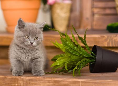mischief: kitten knocked over flower pot Stock Photo