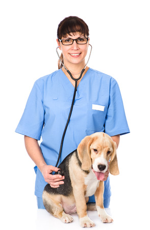 veterinarian examining a puppy dog  isolated on white background photo