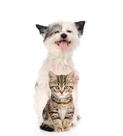 smiling cat: Funny dog and Scottish kitten  looking at camera  isolated on white background