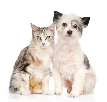 cat and dog sitting together  isolated on white background photo