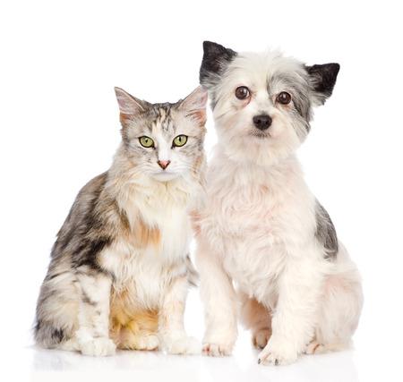 cat and dog sitting together  isolated on white background photo