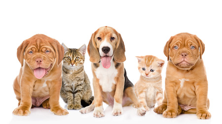 large group of cats and dogs sitting in front  isolated on white background photo