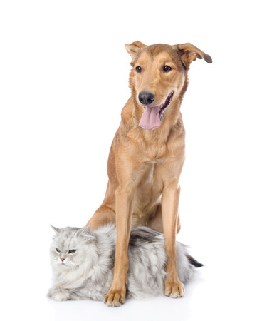 dog with cat looking away  isolated on white background photo