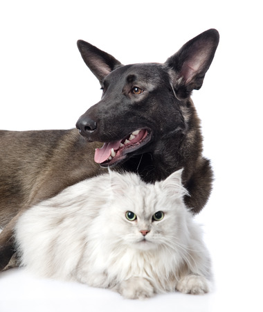 portrait of a cat and dog  isolated on white background photo