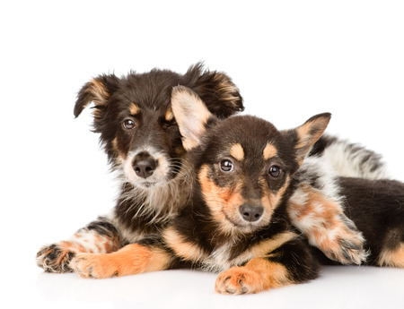 two embracing a puppy looking at camera  isolated on white background photo